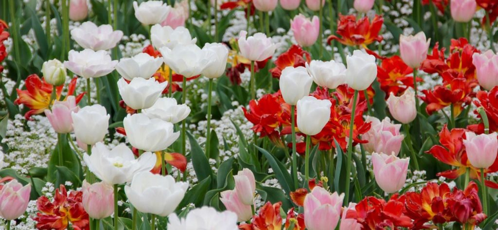 flores de primavera min