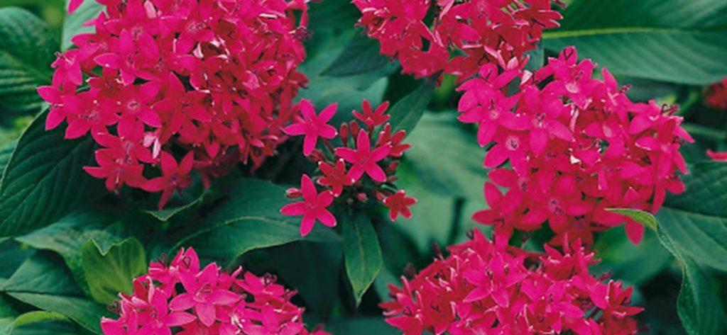 flores de verano min