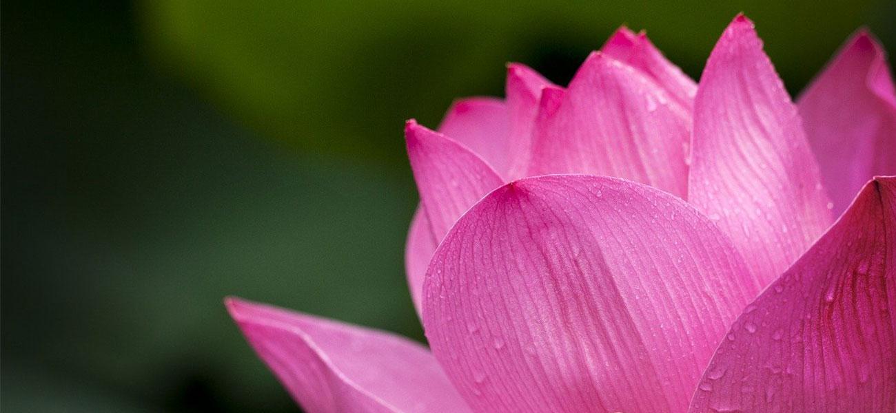 Flores Color