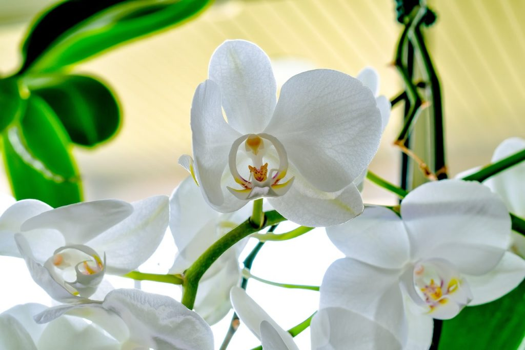 orchid 4793746 1280 min