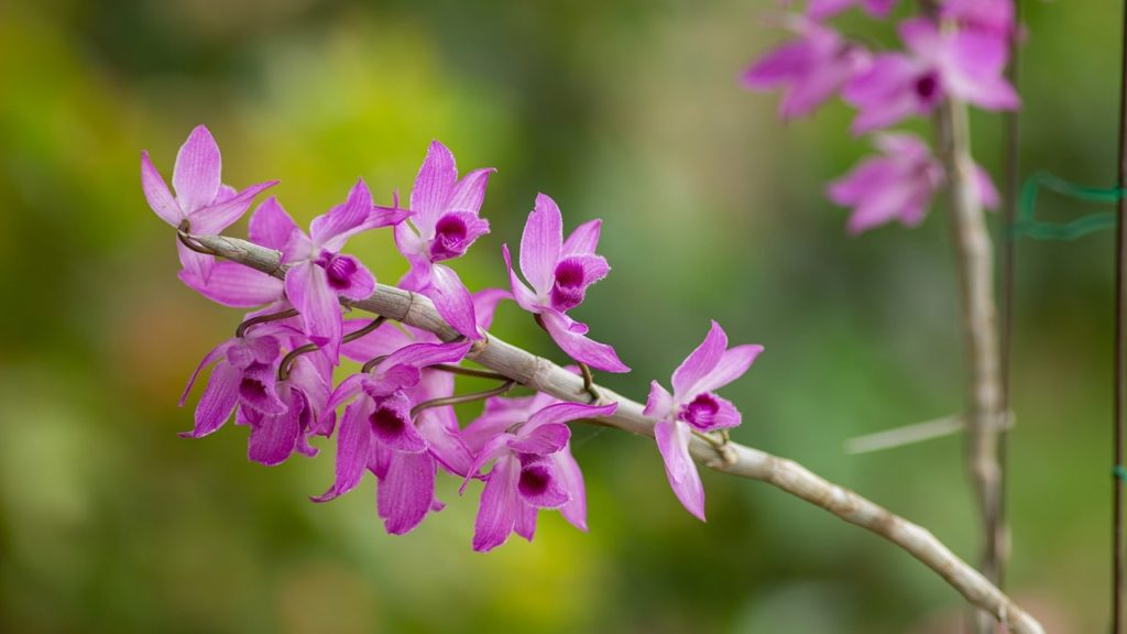 orchid 5077979 1280 min
