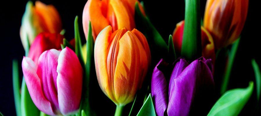 flowers 429041 1280
