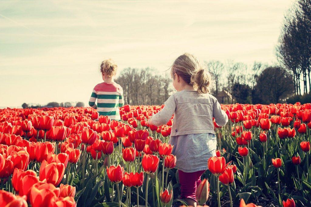 ¿De donde son originarios los tulipanes?