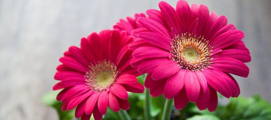 flower 631765 1280 1