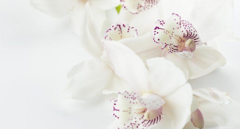 orchids 1209612 1280 min