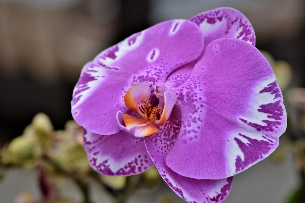 orchids 4679127 1280