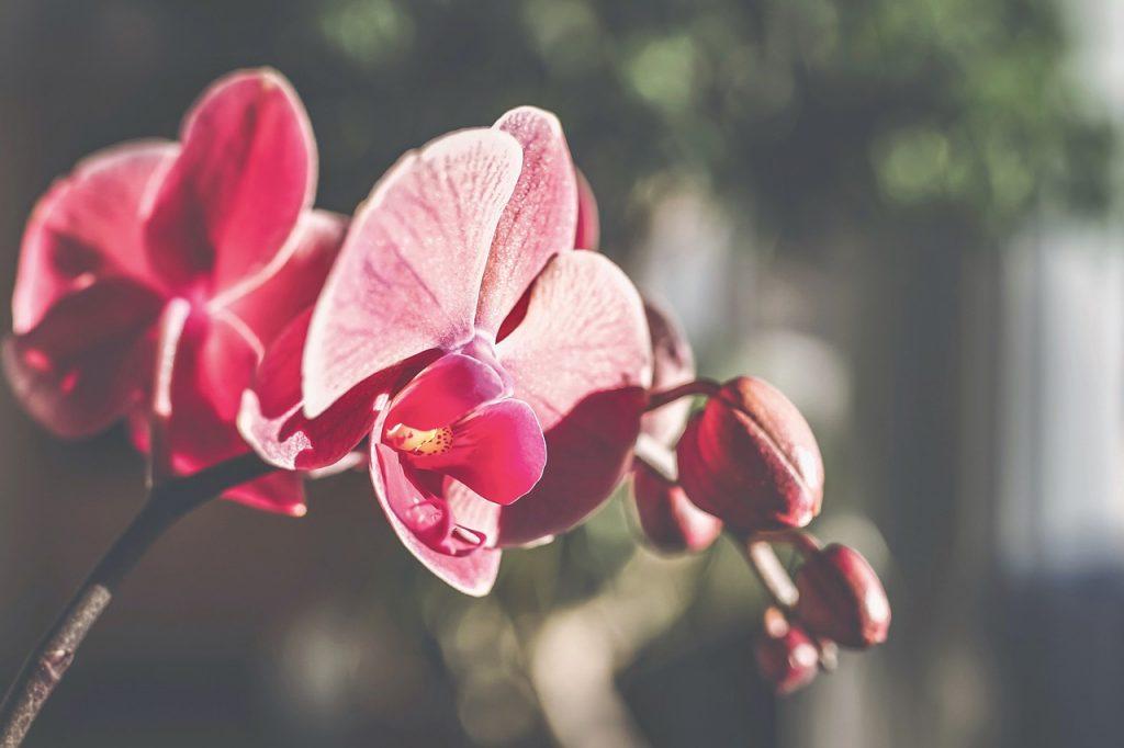 orchids 4812189 1280