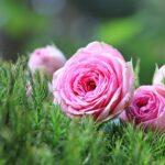 Las 10 Nombres de flores para mujer más populares