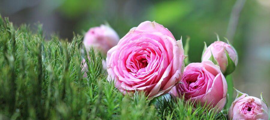 nombres de flores de mujer